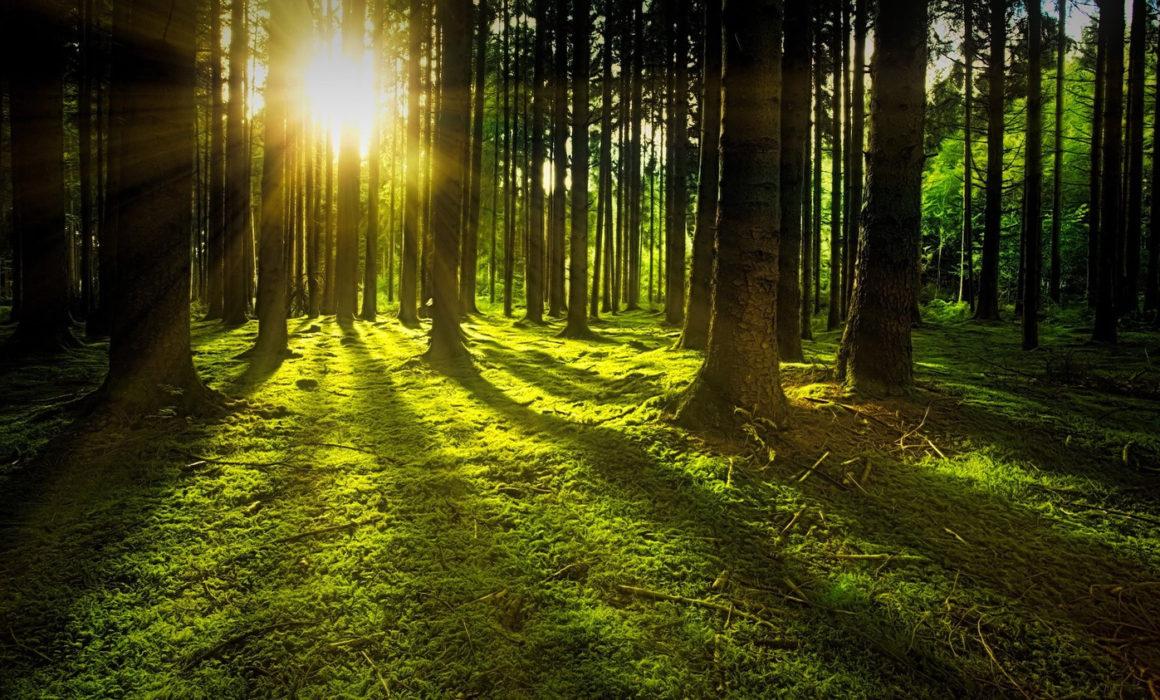 カーボンオフセット_木_森/ Carbon Offset_tree_forest